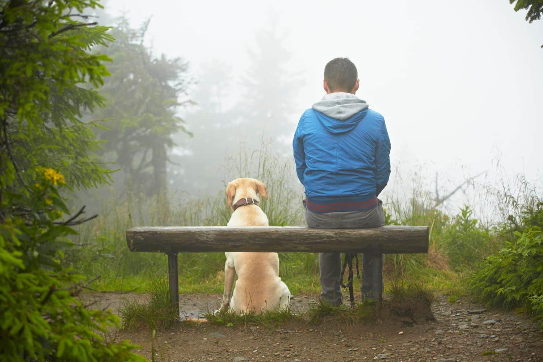 Quelle est la différence entre les humains et les animaux?